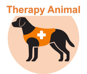 Therapy Animal Dog